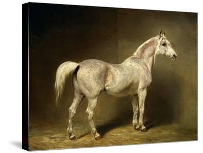 Beatrice, the White Arab Saddlehorse of Helmuth Graf Von Moltke, 1855-Carl Constantin Steffeck-Stretched Canvas Print