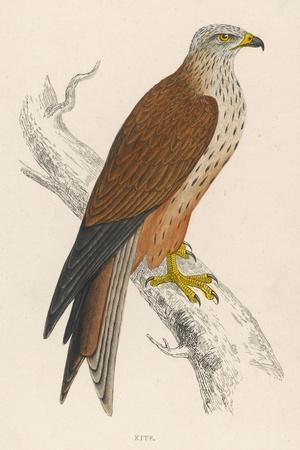 Red Kite-Reverend Francis O^ Morris-Stretched Canvas Print