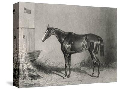 Portrait of the Racehorse Harkaway Who Won the 1838 Goodwood Cup in His Stable-W.b. Scott-Stretched Canvas Print
