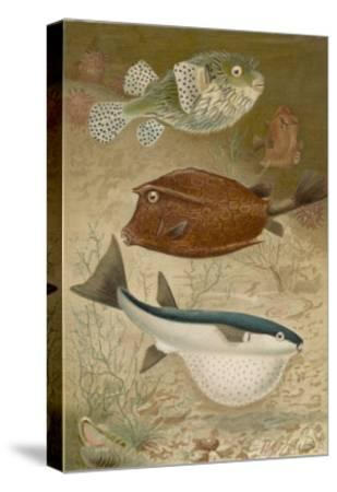 Globe Fish and Coffer Fish Swimming Together--Stretched Canvas Print