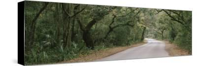Trees Both Sides of a Road, Fort Clinch State Park, Amelia Island, Florida, USA--Stretched Canvas Print