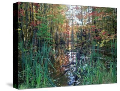 Autumn Scene in Woodland with Stream, Wisconsin, USA-Larry Michael-Stretched Canvas Print