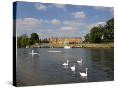 Swans and Sculls on the River Thames, Hampton Court, Greater London, England, United Kingdom-Charles Bowman-Stretched Canvas Print