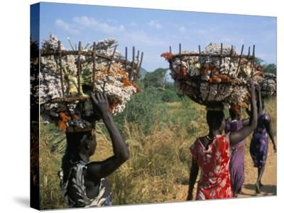 Nuer Women Carrying Sorghum, Gambella Region, Ilubador State, Ethiopia, Africa-Bruno Barbier-Stretched Canvas Print