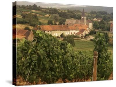 Maconnais Vineyards, Poilly Fuisse, Ozenay, Near Macon, Saone-Et-Loire, Burgundy, France-David Hughes-Stretched Canvas Print