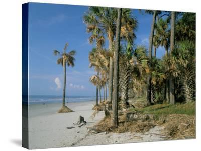 Sub-Tropical Forest and Coastline, Hunting Island State Park, South Carolina, USA-Duncan Maxwell-Stretched Canvas Print