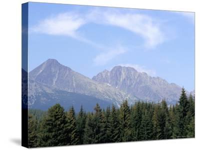 Mountain Pines, Vysoke Tatry Mountains, Vysoke Tatry, Slovakia-Richard Nebesky-Stretched Canvas Print