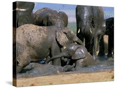 African Elephant (Loxodonta Africana) Mudbathing, Addo National Park, South Africa, Africa-Steve & Ann Toon-Stretched Canvas Print
