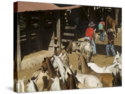 Horses, Hacienda Guachipelin, Near Rincon De La Vieja National Park, Guanacaste, Costa Rica-R H Productions-Stretched Canvas Print