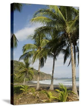 Palm Trees on Beach at Punta Islita, Nicoya Pennisula, Pacific Coast, Costa Rica, Central America-R H Productions-Stretched Canvas Print