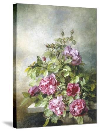 Romantic Roses-Claude Massman-Stretched Canvas Print