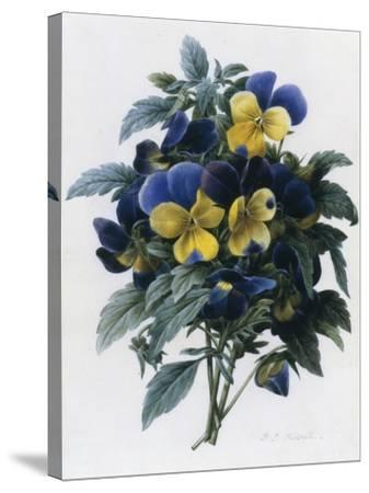 Pansies-Pierre-Joseph Redout?-Stretched Canvas Print