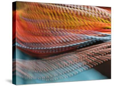 Samburu Dancer's Colorful Necklace, Samburu National Reserve, Kenya-Arthur Morris-Stretched Canvas Print