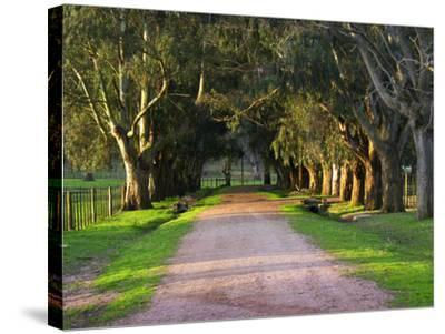 Tree Lined Country Road at Sunset, Montevideo, Uruguay-Per Karlsson-Stretched Canvas Print