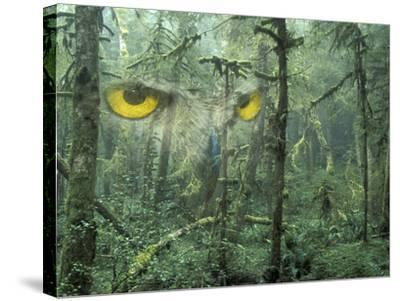 Montage, Owl, Forest, Oregon, USA-Nancy Rotenberg-Stretched Canvas Print