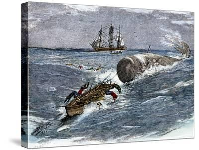 Angry Whale Chasing a Harpoon Boat--Stretched Canvas Print