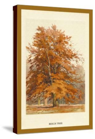 The Beech Tree-W^h^j^ Boot-Stretched Canvas Print