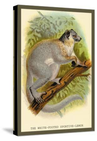 The White-Footed Sportive Lemur-Sir William Jardine-Stretched Canvas Print
