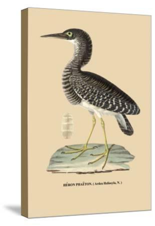Heron Phaeton--Stretched Canvas Print