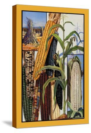 Indian Corn--Stretched Canvas Print