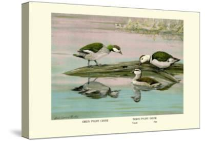 Green and Indian Pygmy Goose-Louis Agassiz Fuertes-Stretched Canvas Print