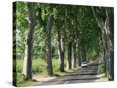 Car on Typical Tree Lined Country Road, Near Pezenas, Herault, Languedoc-Roussillon, France-Ruth Tomlinson-Stretched Canvas Print