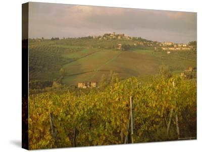 Vineyard, Tuscany, Italy, Europe-Firecrest Pictures-Stretched Canvas Print