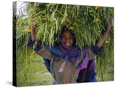 Portait of Local Girl Carrying a Large Bundle of Wheat and Yellow Meskel Flowers, Ethiopia-Gavin Hellier-Stretched Canvas Print