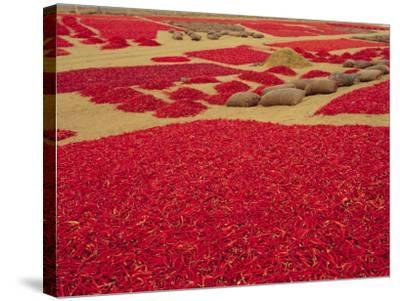 Picked Red Chilli Peppers Laid out to Dry, Rajasthan, India-Bruno Morandi-Stretched Canvas Print