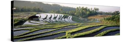 Agricultural Landscape of Rice Fields and Terraces, Indonesia, Southeast Asia-Bruno Morandi-Stretched Canvas Print