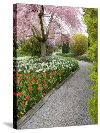 Tulip and Daffodil Garden at Tulip Festival, Skagit Valley, Washington-Jamie & Judy Wild-Stretched Canvas Print