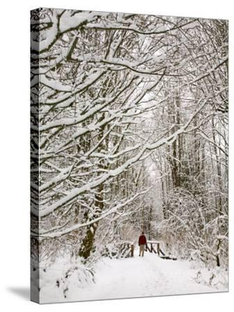Trail and Hiker in Winter, Tiger Mountain State Forest, Washington, USA-Jamie & Judy Wild-Stretched Canvas Print