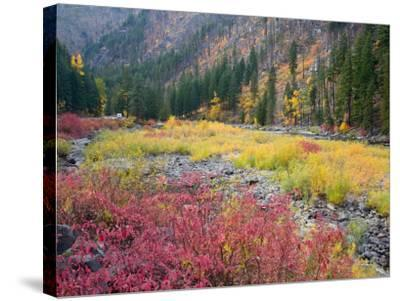Autumn Color Along the Wenatchee River, Tumwater Canyon, Wenatchee National Forest, Washington, USA-Jamie & Judy Wild-Stretched Canvas Print