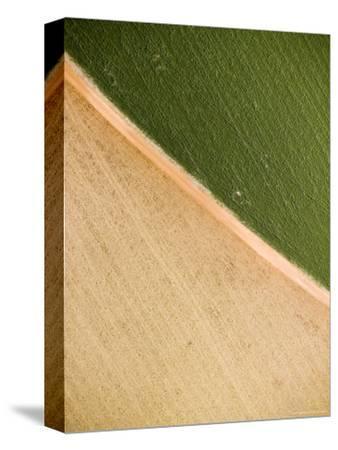 Alfalfa Crop with Pivot Irrigation, Zambia-Michael Fay-Stretched Canvas Print
