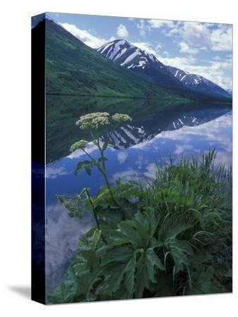 Summit Lake, Cow Parsnip, Lake and Mountains, Alaska-Rich Reid-Stretched Canvas Print
