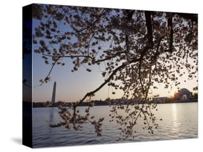 Washington Monument and Jefferson Memorial with Cherry Blossom Trees, Washington, D.C.-Kenneth Garrett-Stretched Canvas Print