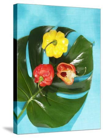 Red and Yellow Habanero Chillies-Armin Zogbaum-Stretched Canvas Print
