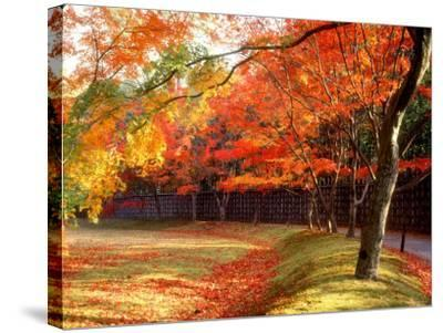 Maple Trees Near Villa Katsura--Stretched Canvas Print