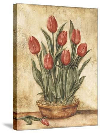 Potted Tulips-Tina Chaden-Stretched Canvas Print