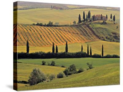 Val d'Orcia, Tuscany, Italy-Walter Bibikow-Stretched Canvas Print