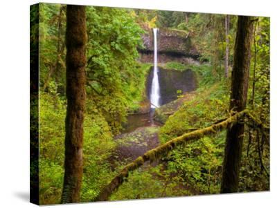 Silver Falls State Park, Salem, Oregon-Darrell Gulin-Stretched Canvas Print