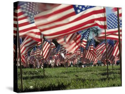Grassy Field with American Flags Stuck in Ground-Kevin Leigh-Stretched Canvas Print