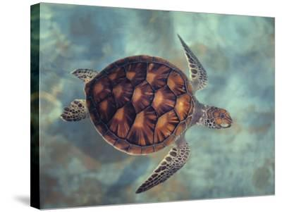 Green Turtle, Java, Indian Ocean-Gerard Soury-Stretched Canvas Print