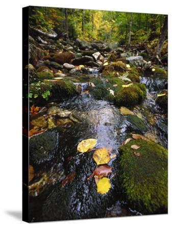 Stream in the Woods-Dan Gair-Stretched Canvas Print