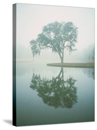 Louisiana, Oak Tree with Reflection-Ken Glaser-Stretched Canvas Print