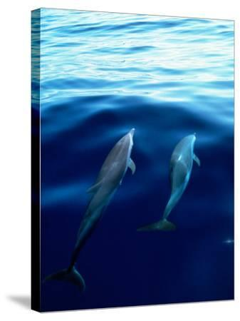 Overview of Dolphins Swimming Underwater-Stuart Westmorland-Stretched Canvas Print