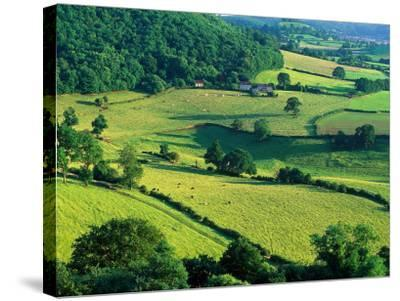 Rolling Countryside-Peter Adams-Stretched Canvas Print