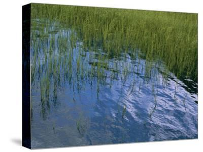 Rippling Water Among Aquatic Grasses in a Marsh-Heather Perry-Stretched Canvas Print