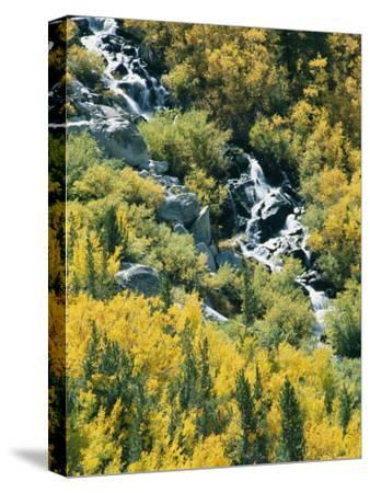 Waterfall and Aspen Fall Colors in the High Sierra in October-Rich Reid-Stretched Canvas Print