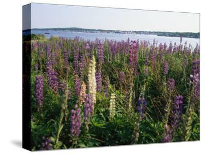 Maine Wetlands-Stephen St^ John-Stretched Canvas Print